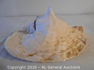 "Large 10"" Seashell"