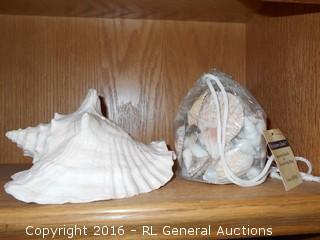 "Large Seashell 7"" L X 4"" T & Bag Full of Small Shells"