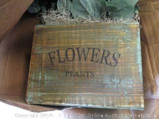 DECORATIVE FLOWER PLANT