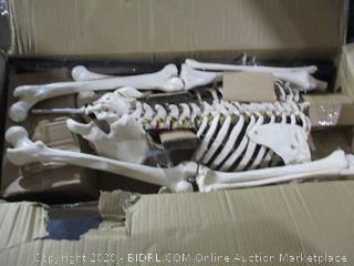 Ronten Human Skeleton Model  Anatomical Skeleton Lifesize