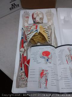 access scientific miniature painted human skeleton