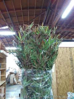 8 foot harvest bamboo tree in planter