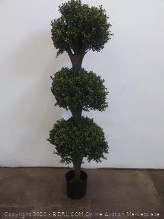 Seven Oaks plastic plant
