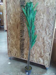 6' Dracaena plant (cracked base)