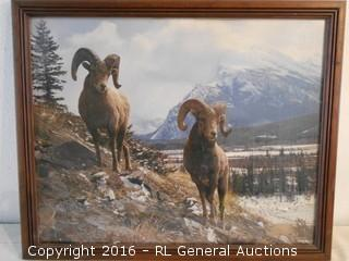 "Ram / Mountain Goat Photo Artwork 22"" W X 18"" T"