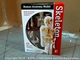 human Anatomy Model Skeleton